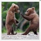 Медвежата 02.31.53